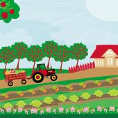 Rural Landscape -  Tractor And Orchard