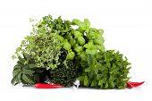 Aromatic Plants Mix
