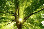 Sunrays Dramatically Falling Through A Tree