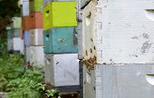 image of bee keeping  - swarm of bees flying around colorful beehives - JPG