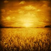 Image of sunset over wheat field in grunge style.
