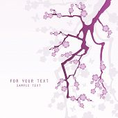 foto of sakura  - abstract background with sakura branch - JPG