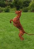 Pharaon hound Dancing on a green grass