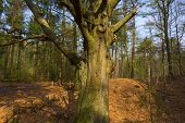 Beech forest in sunlight in spring