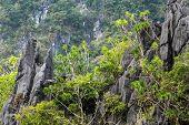 Limestone tropical coastline landscape in Palawan island, Philippines