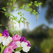 Tulip Flowers And Birch