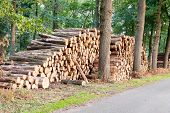Tree Logs Piled Up Near A Forest Road