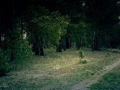Retro Pine Forest