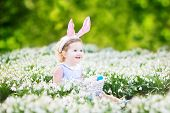 Adorable toddler girl wearing bunny ears playing with Easter eggs in first white spring flowers