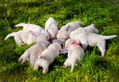 puppies eating from one bowl