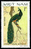 Vintage  Postage Stamp. Bird Pavo Muticus.