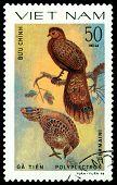 Vintage  Postage Stamp. Bird Polyplectron Germaini.
