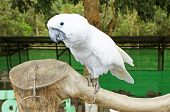 Beautiful White Parrot Ara