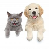 pic of paws  - Happy cat and dog show paws above white banner - JPG