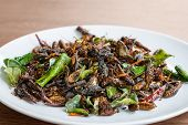 Fried Edible Insects Mix On White Plate