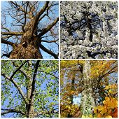 Set of four seasons trees