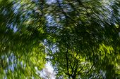Spin Effect Looking Of Past Pine Trees