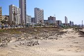 Rehabilitated Sand Dune On Beach Front In Durban