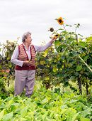 Senior Woman Holding A Sunflower