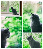 Cat Looking At The Rain Outside The Window
