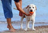 A Man And A Labrador At The Sea