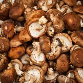 Mushrooms. Vegetables And Herbs For Sale At Asian Market. Organic Food Background