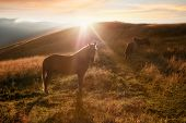 Sunset In Mountains Nature Background. Horses Silhouette At Haze