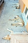 Dogs are sleeping on the street