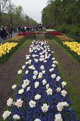 Famous flowers in a dutch garden.