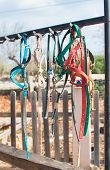 stock photo of bridle  - Horse bridles and other equipment in the stable - JPG