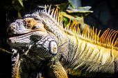Reptile Surprised