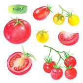 Watercolor collection of tomatoes, vector illustration.