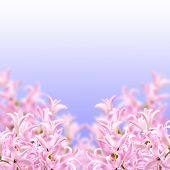 Collage Of Colors Pink Hyacinth