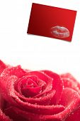 Pink rose on white background against red card