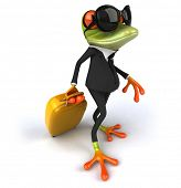 picture of amazonian frog  - Fun frog - JPG