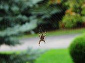 Spider 405
