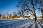 foto of winter palace  - Winter landscape tree in the front and historical palace at background - JPG