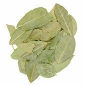 dried green bay leaf