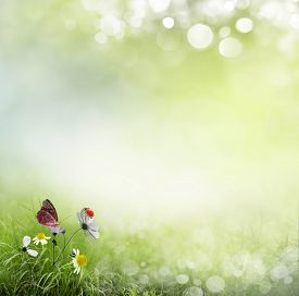 picture of spring-weather  - Spring background with flowers and ladybug  - JPG