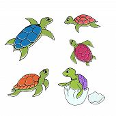 picture of turtle shell  - Vector illustration  - JPG
