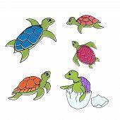 pic of turtle shell  - Vector illustration  - JPG
