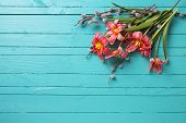 pic of willow  - Fresh spring red tulips flowers willow branches on green painted wooden planks - JPG