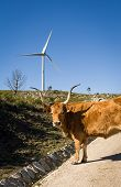 stock photo of wind-power  - Wind farm. Modern windmills or wind turbines in the countryside landscape. Electricity is powered ecological and considered better for the environment over oil and other fossil fuels. A renewable resource for energy. - JPG