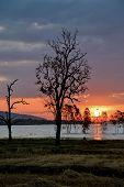 image of fantastic  - Fantastic silhouette tree in sun rise Thailand  - JPG