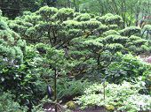 Japanese Garden Green Trees
