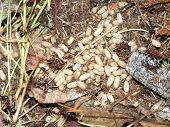 Ant Colony And Eggs