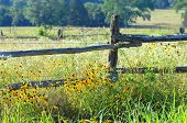 stock photo of profusion  - Rustic fence posts are overgrown with blooming wildflowers in yellow and white - JPG