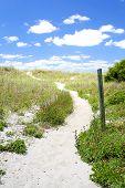 Path To A Carolina Beach
