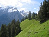 Green Swiss Hills Between High Mountains  Switzerland