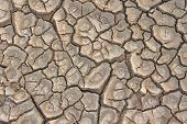 Barren Brown  And Beige Earth. Dry Cracked Earth Background. Cracked Mud Pattern. Soil In Cracks.cre poster